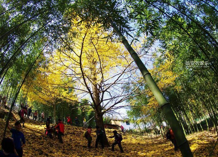临安神龙川农家乐旅游